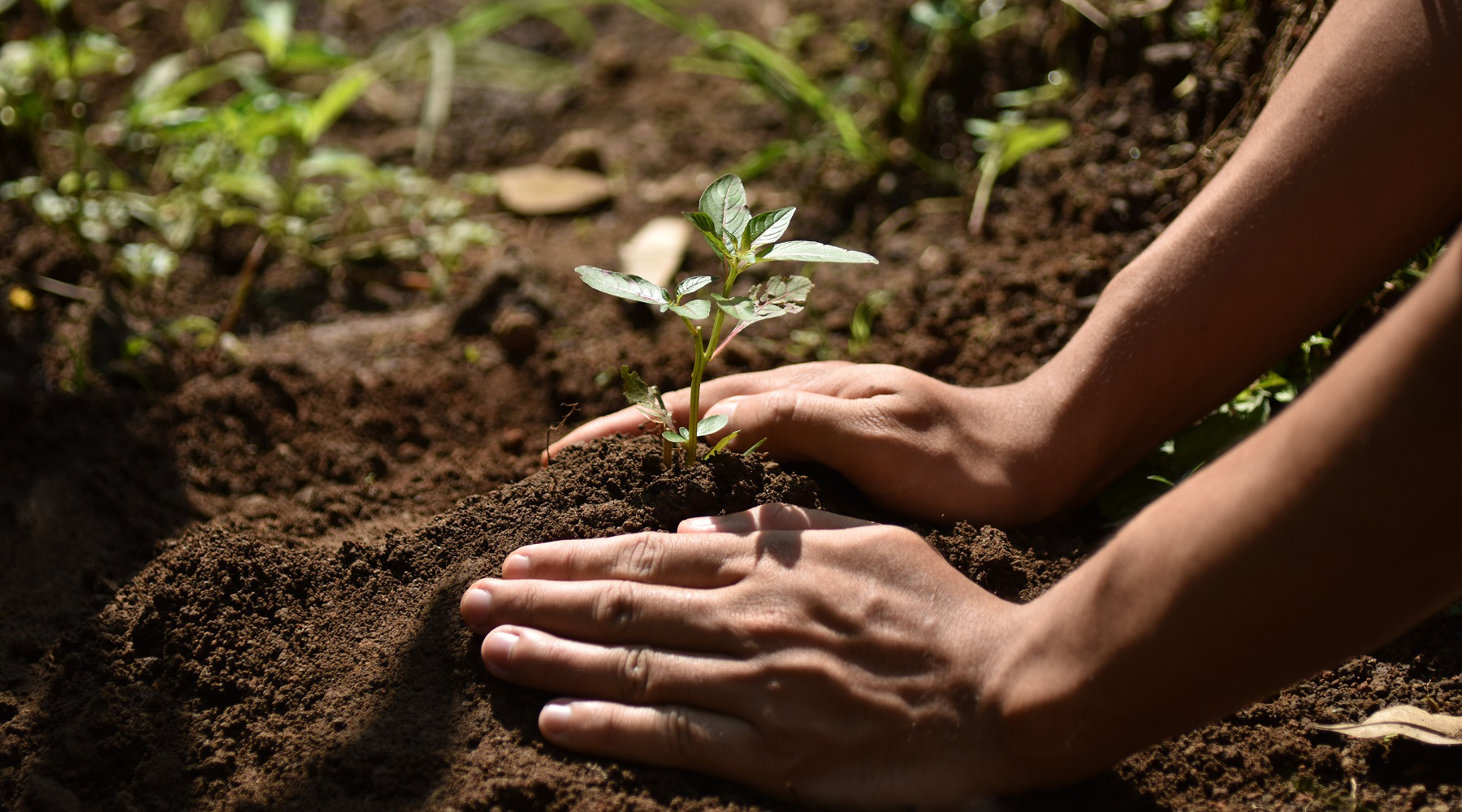 Hand holding seed tree for planting into soil. Eco earth day concept; Shutterstock ID 1655055256; Purchase Order: -